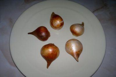 тюльпаны когда выкапывать луковицы и высаживать
