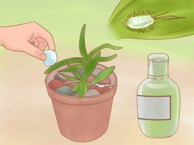 можно ли вырастить орхидею из цветка