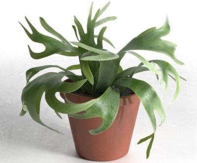 комнатные растения необычные