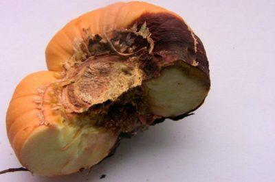 обработка луковиц гладиолусов перед хранением