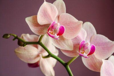 все виды орхидей
