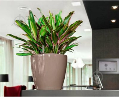 комнатные растения популярные