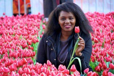 тюльпаны в голландии когда цветут