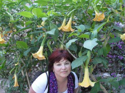 цветок дурман описание