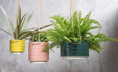 висячие комнатные растения