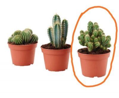 маленькие растения в горшках
