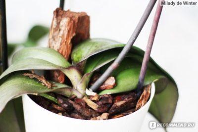 как обработать кору для орхидей