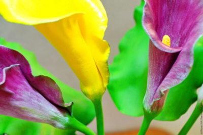цветы похожие на каллы