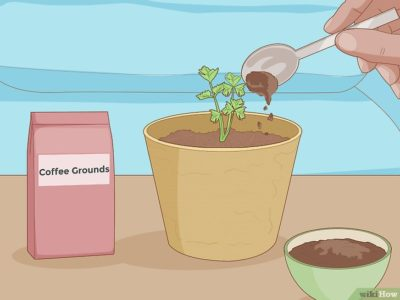 кофе как удобрение для комнатных растений
