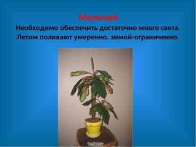 родина комнатных растений