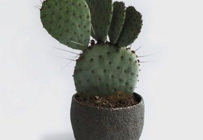 как посадить кактус в горшок