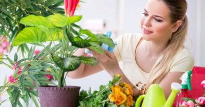 благоприятные дни в октябре для пересадки комнатных растений