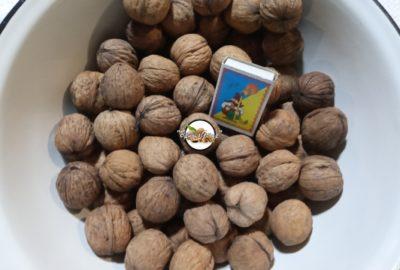 вырастить грецкий орех из ореха